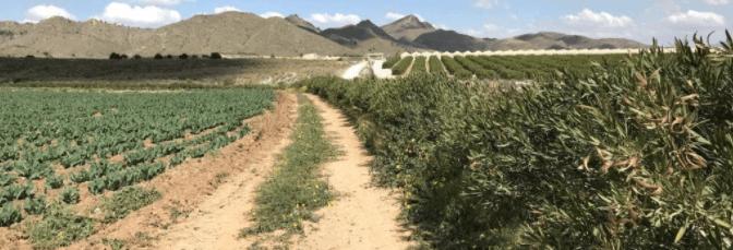 Fundown y Proexport colaborarán en la implantación de barreras vegetales en el Mar Menor