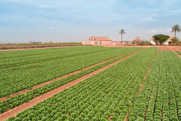 Agrar Systems, S.A.