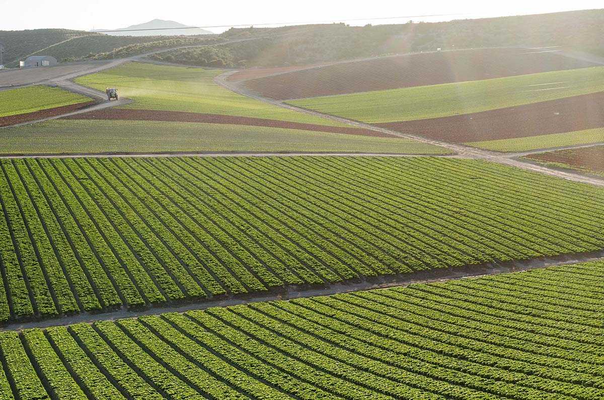 Primaflor impulsa la investigación en cultivos de hoja al aire libre