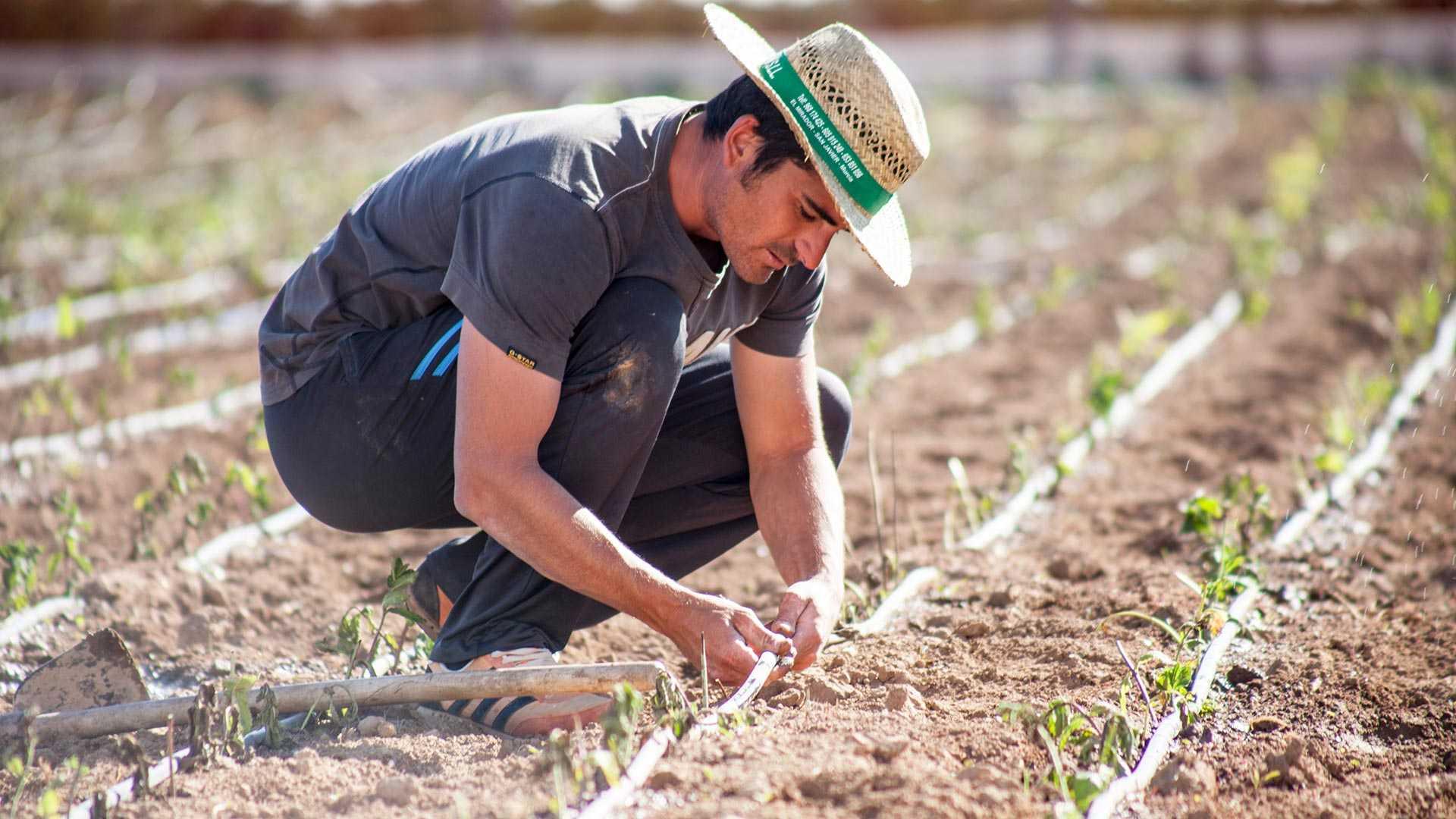 La sostenibilidad de la agricultura actual