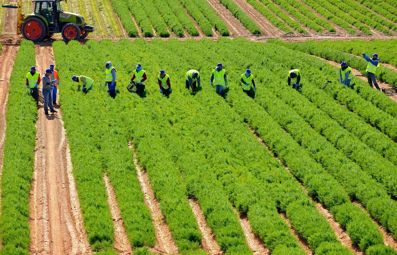 Formación en seguridad alimentaria: IFS versión 7