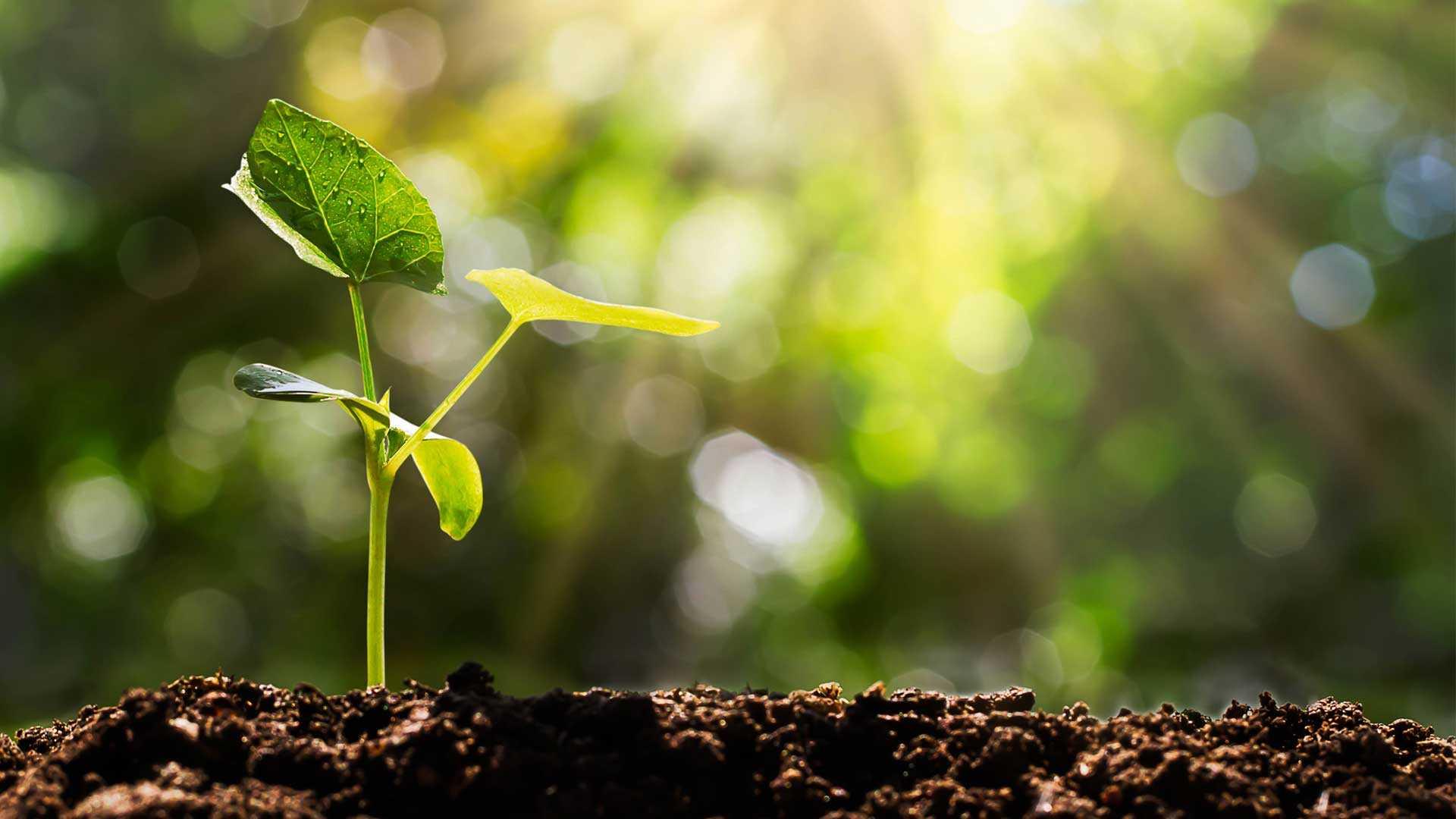 ¿La agricultura nació con un cambio climático?