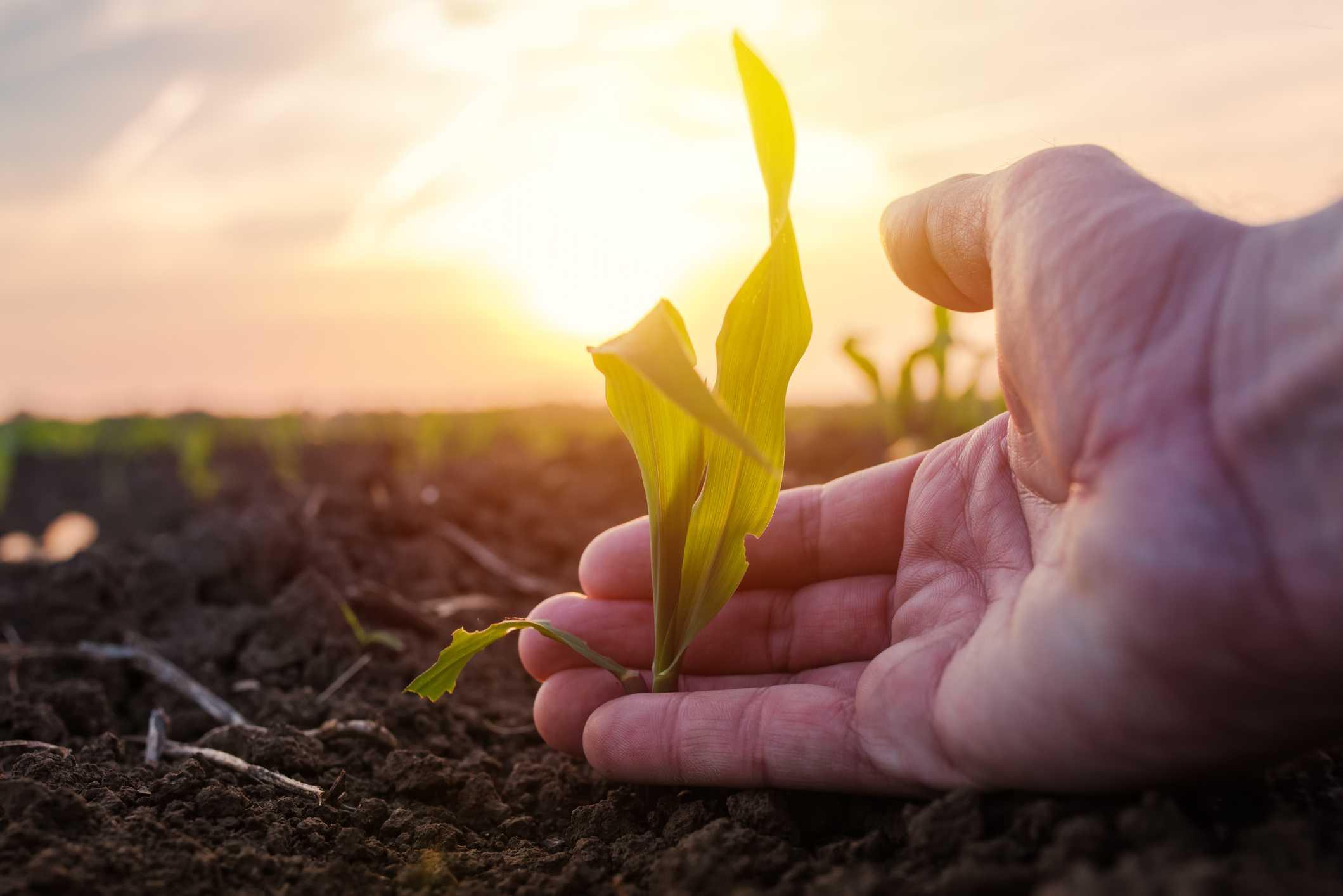 MARM defiende la importancia de la sostenibilidad ambiental