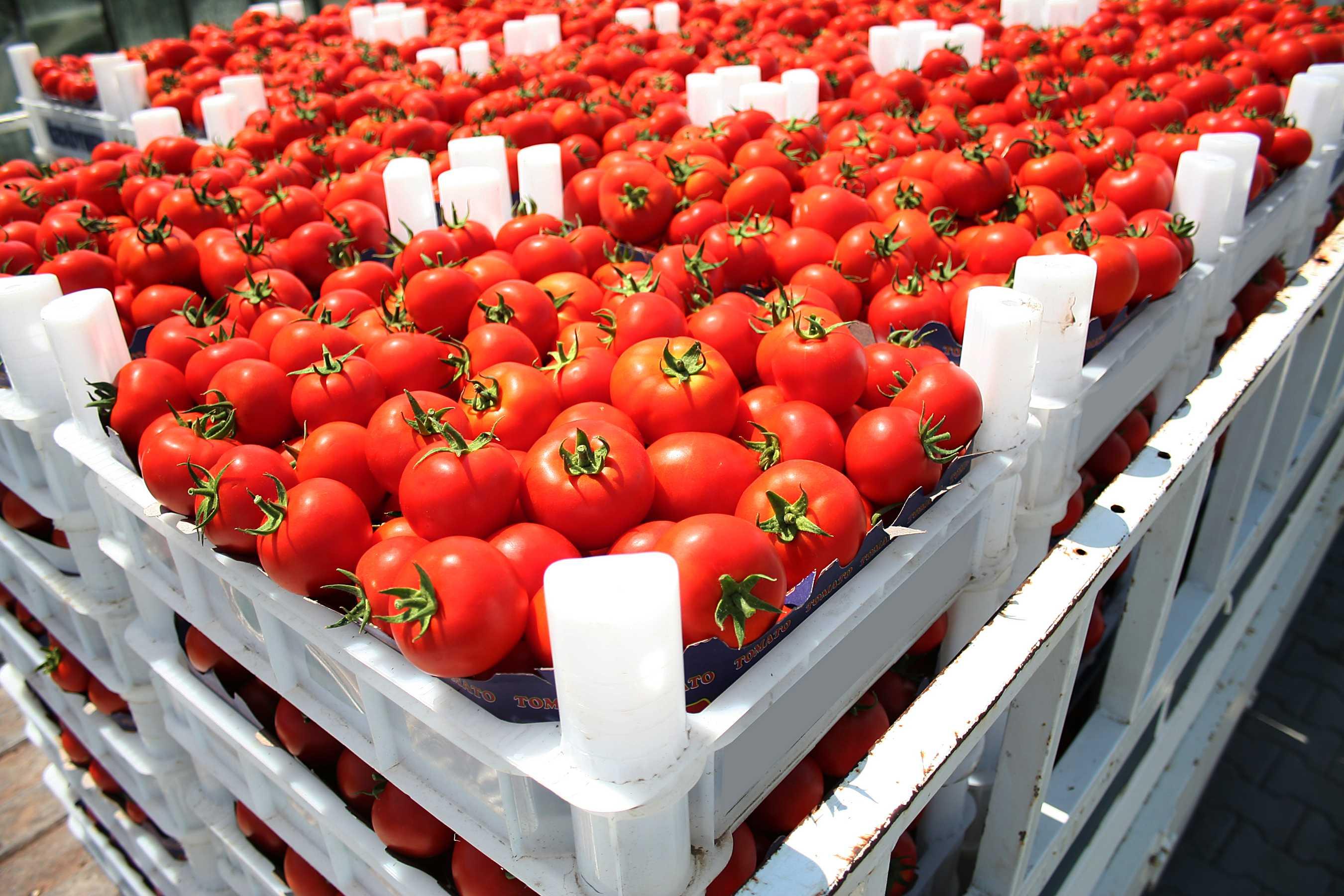 Murcia supera los 2.500 millones de € en exportación hortofrutícola
