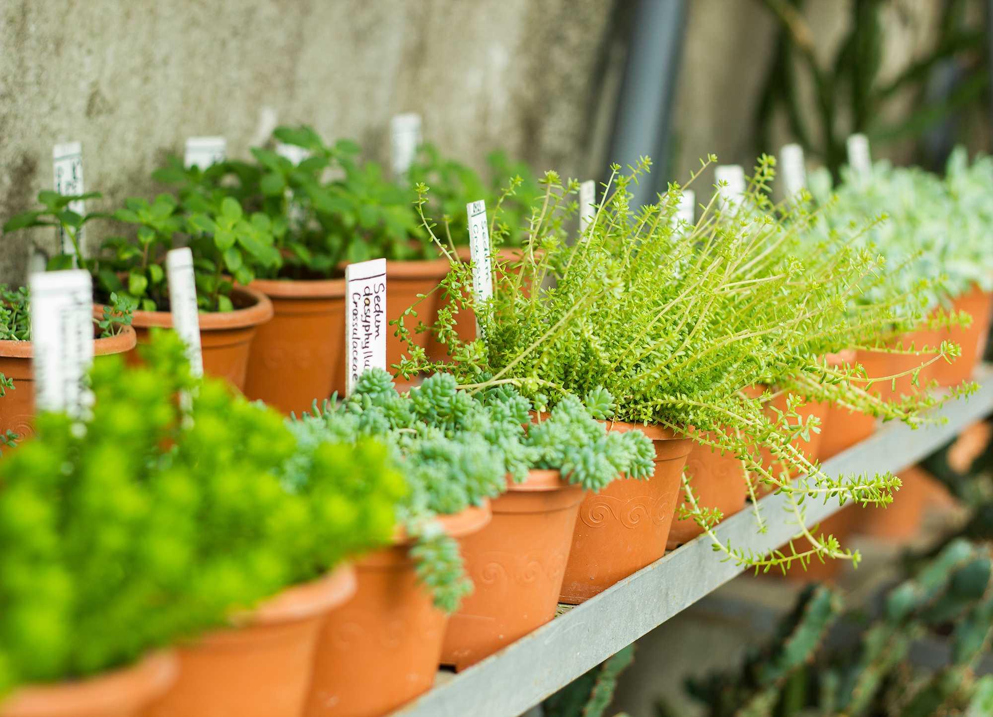 ¿Por qué tener un huerto en casa no es agricultura ecológica?