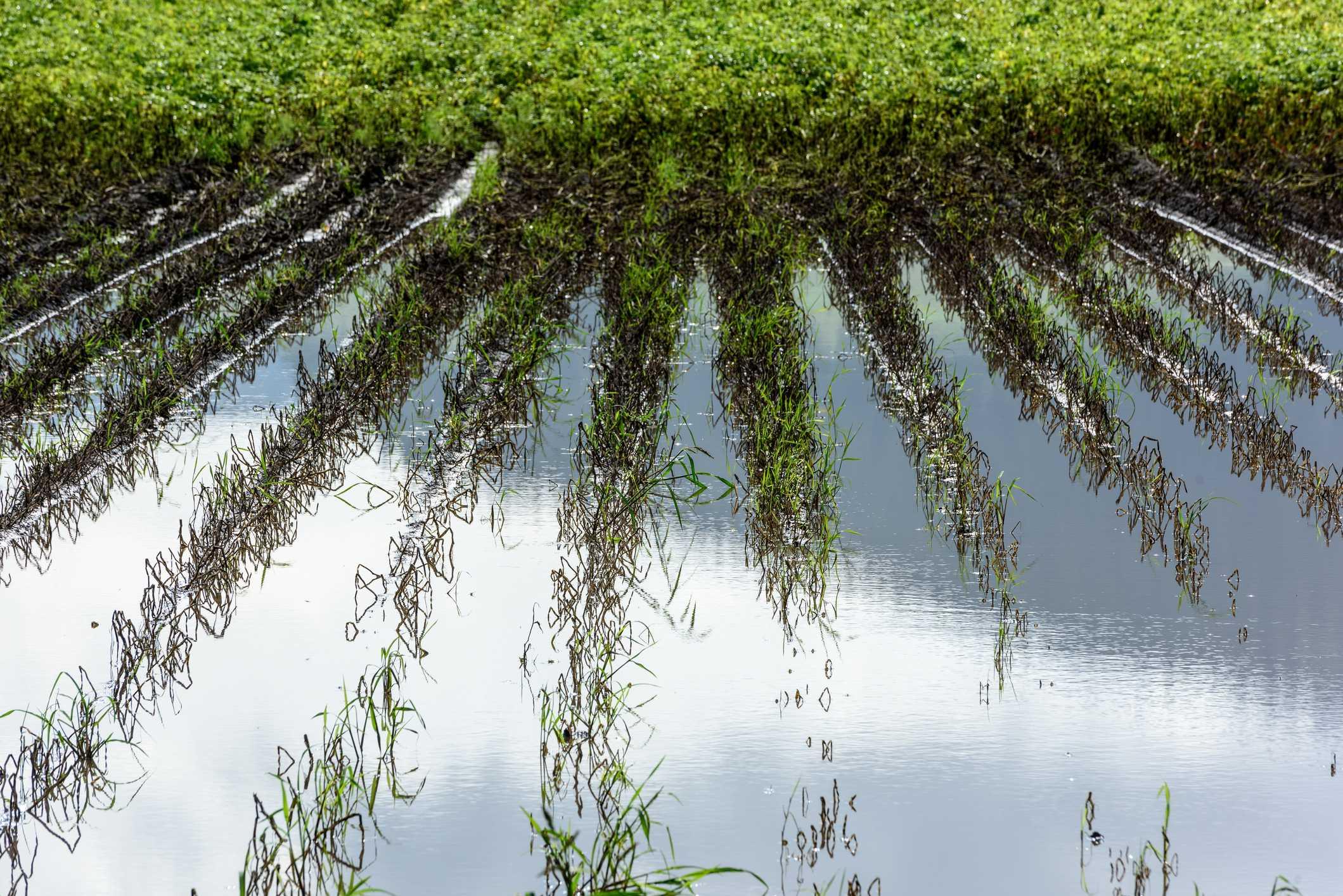 Sobre reutilizar aguas regeneradas …