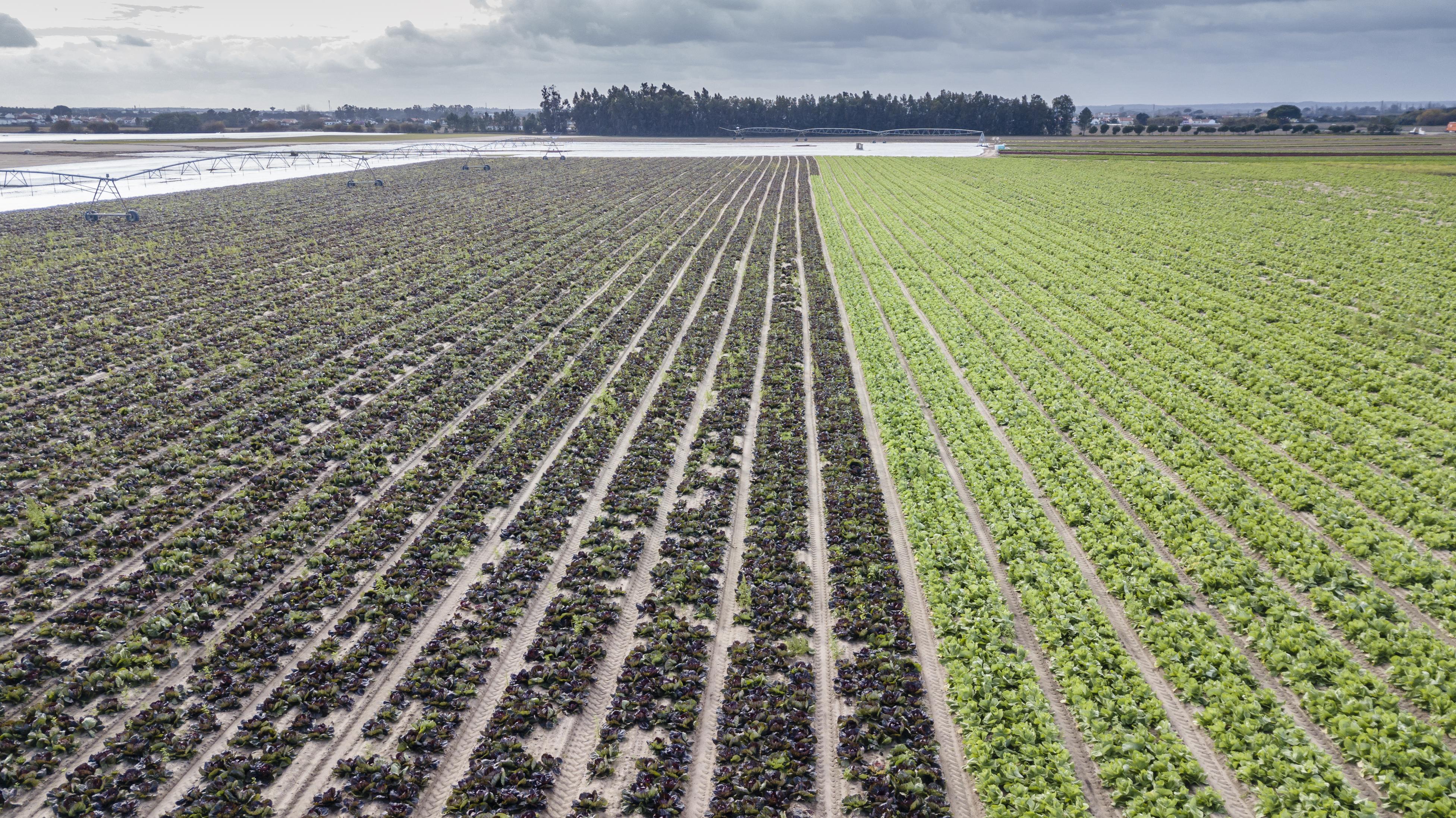 Objetivo: cultivar sin agua (o casi) y sin suelo
