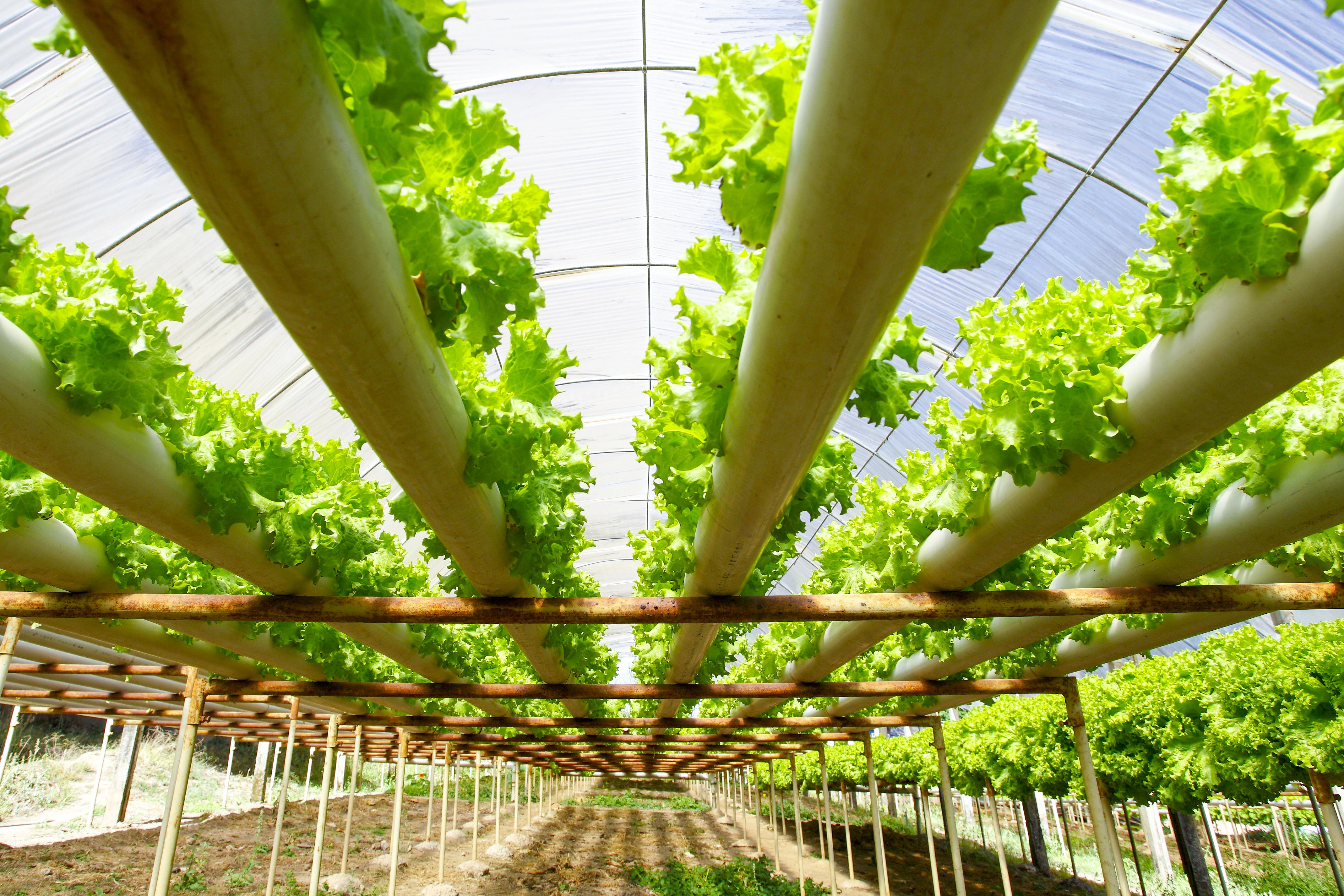 Los fondos de inversión se fijan en el sector agrícola