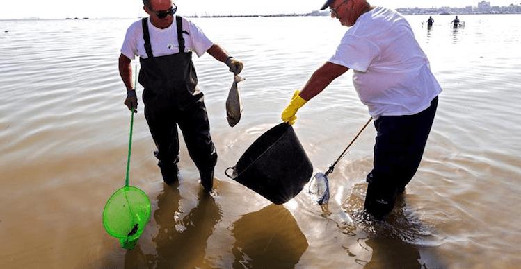 El Instituto Oceanográfico confirma que la DANA provocó la muerte de peces en el Mar Menor