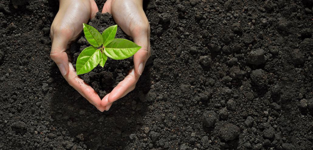 1.600 agricultores se beneficiarán de 10,5 millones para cultivos ecológicos