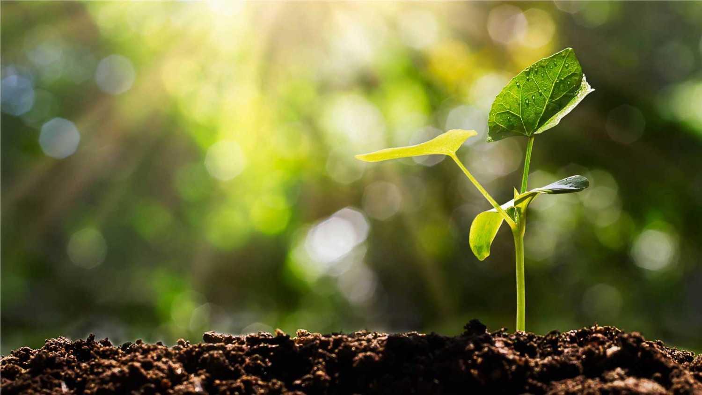 Agricultura Sostenible en torno al Mar Menor