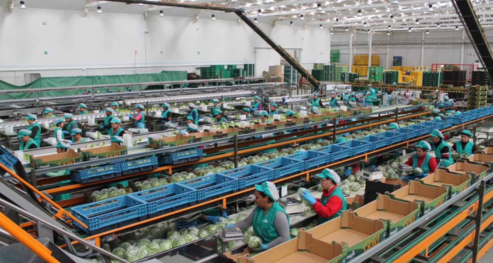 Envases eficientes para verduras sostenibles