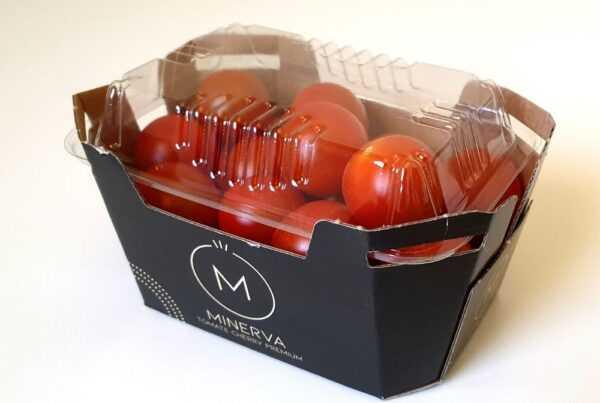 minerva, la nueva variedad de tomate cherry de Looije