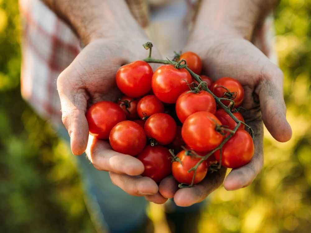 Plantas aromáticas y hortalizas que puedes utilizar para controlar plagas de insectos