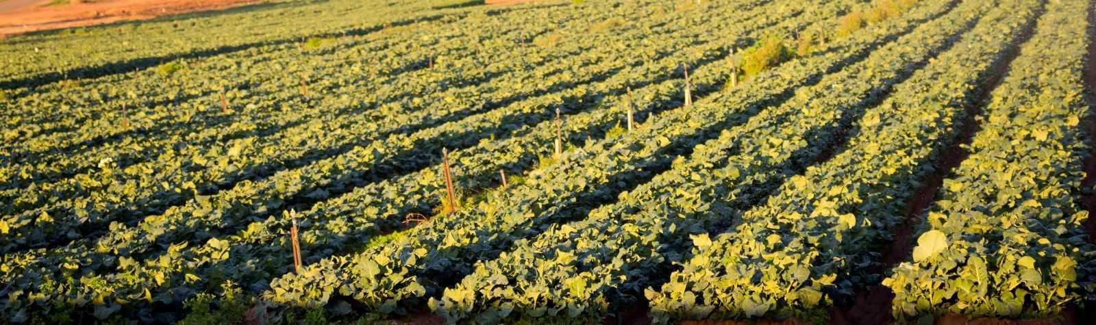 Agua residual, utilización en agricultura y contaminación difusa