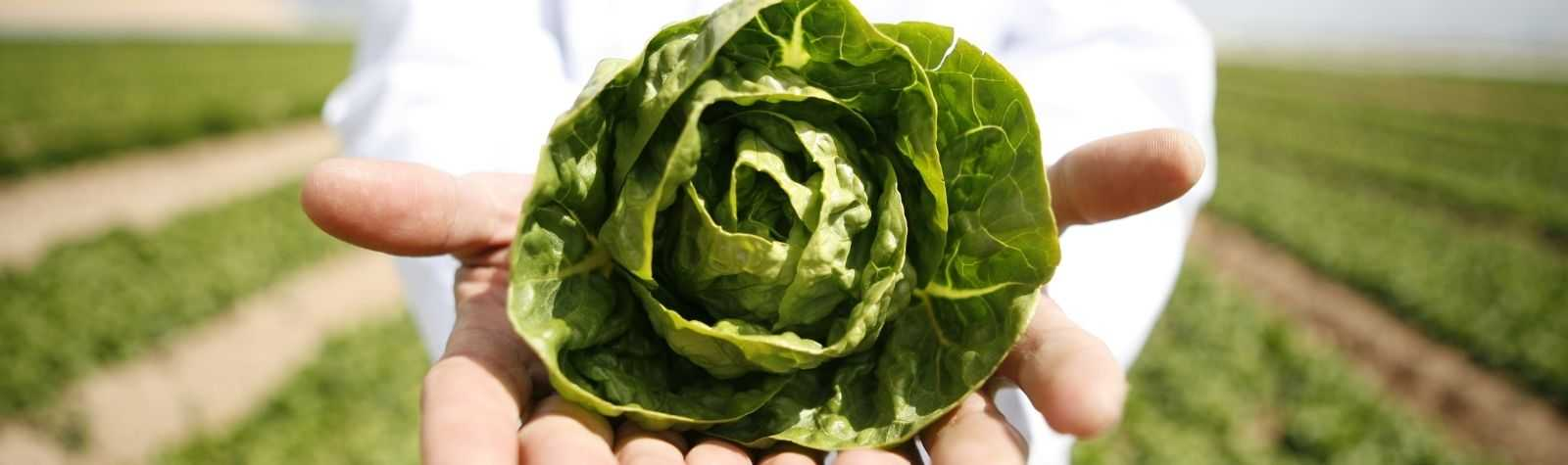 Avanzar en la economía circular, objetivo para el sector hortofrutícola