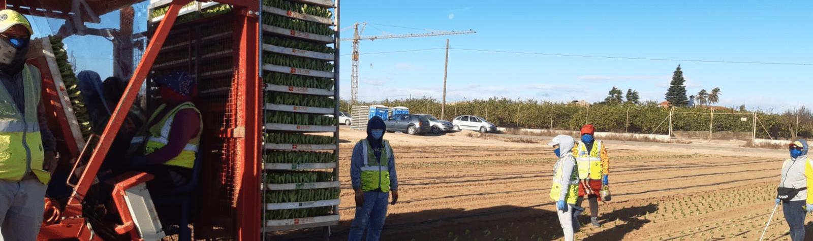 Un 97% de los trabajadores agrarios elige trabajar en el día de huelga convocado por CCOO y UGT