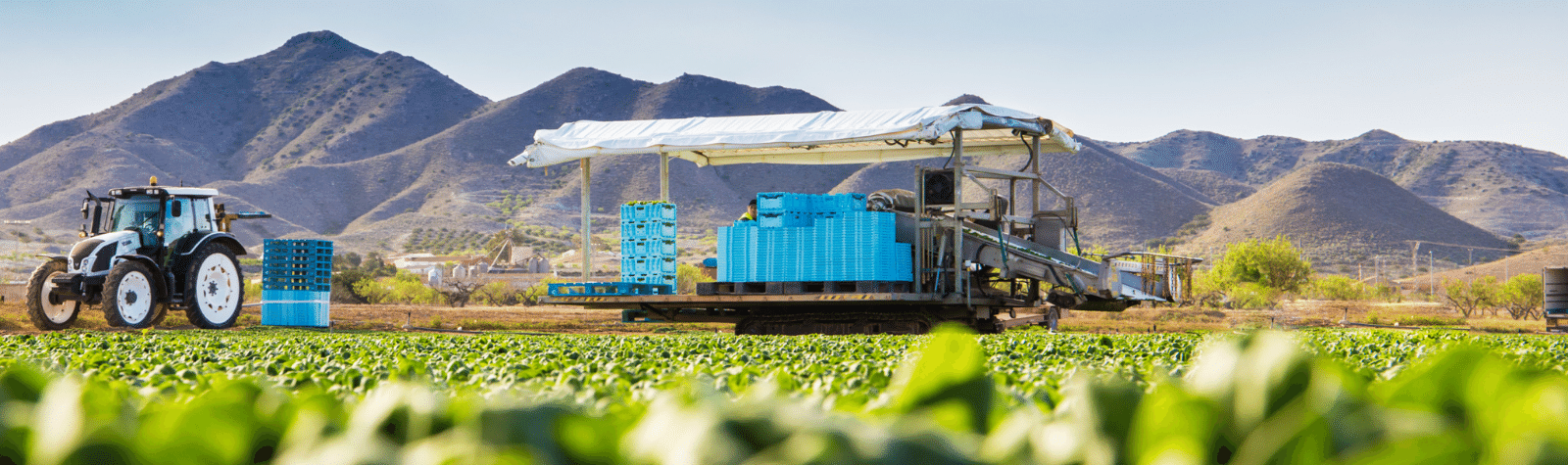 Un mundo de ensaladas de la Región de Murcia