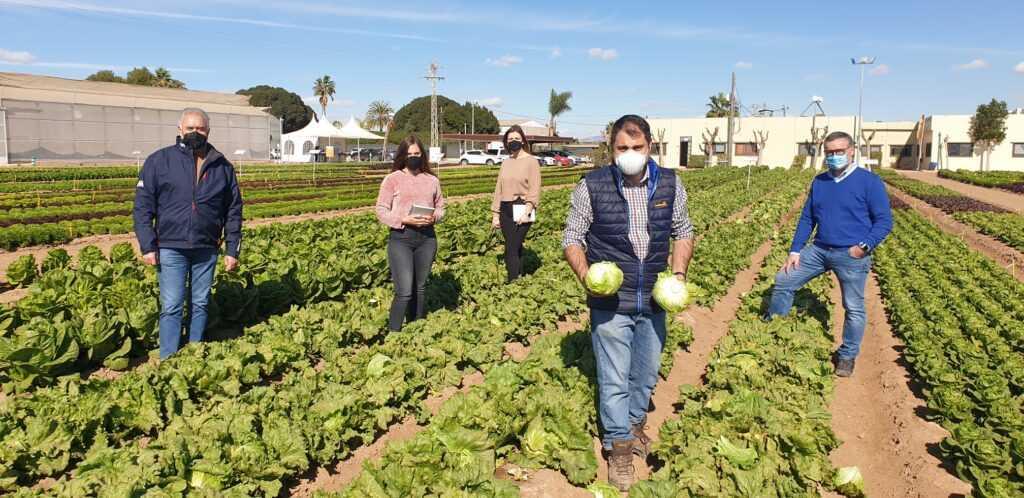 Centro de investigación de lechuga en la Región de Murcia