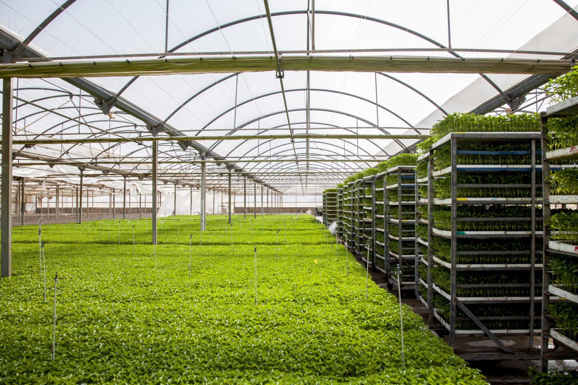 Planas apoya incluir las frutas y hortalizas en las ayudas desacopladas de la PAC
