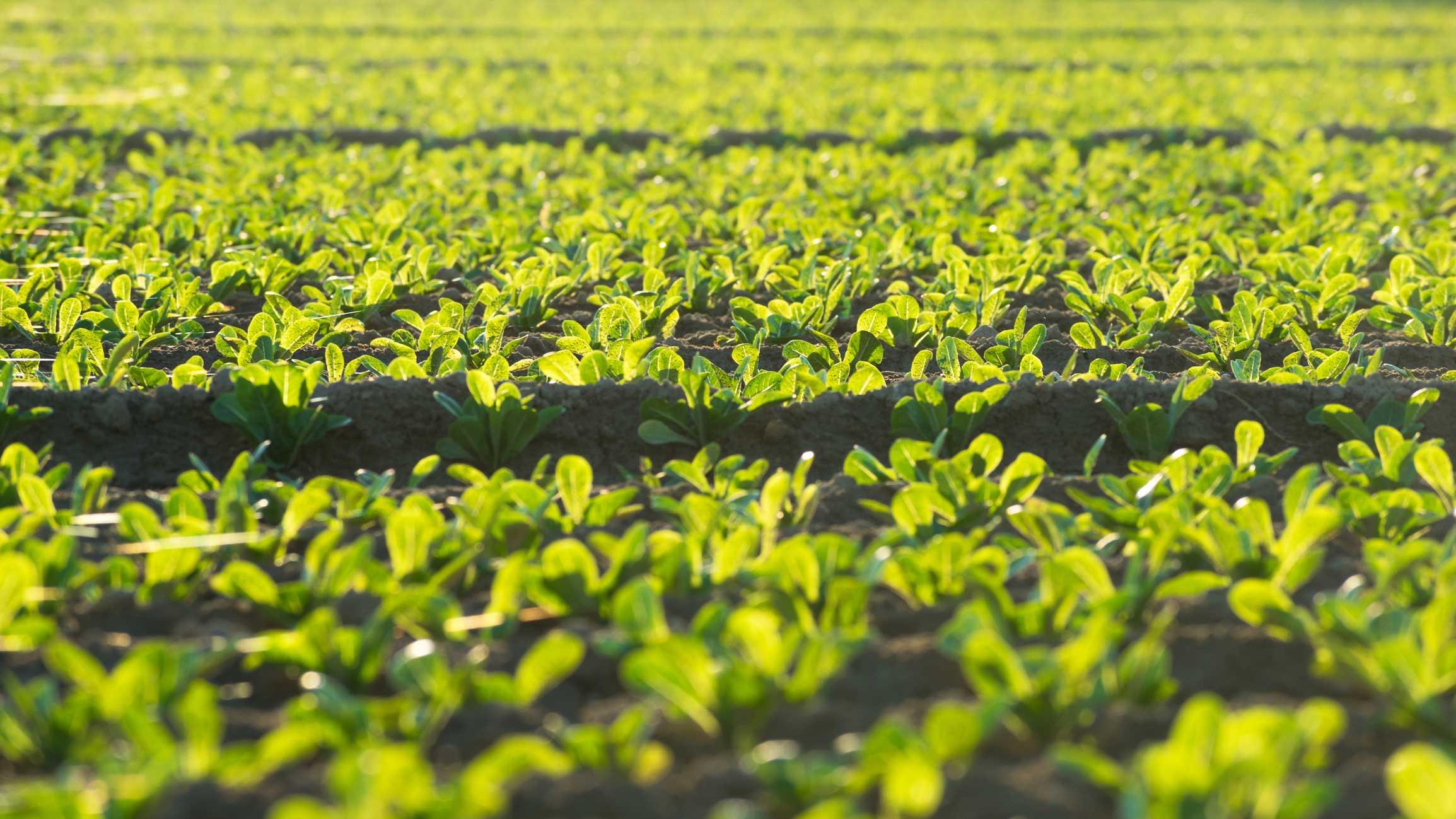 Cae un 2,6% la exportación hortofrutícola murciana hasta junio