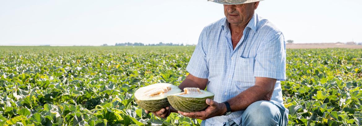 Cómo elegir un buen melón: mitos y realidades